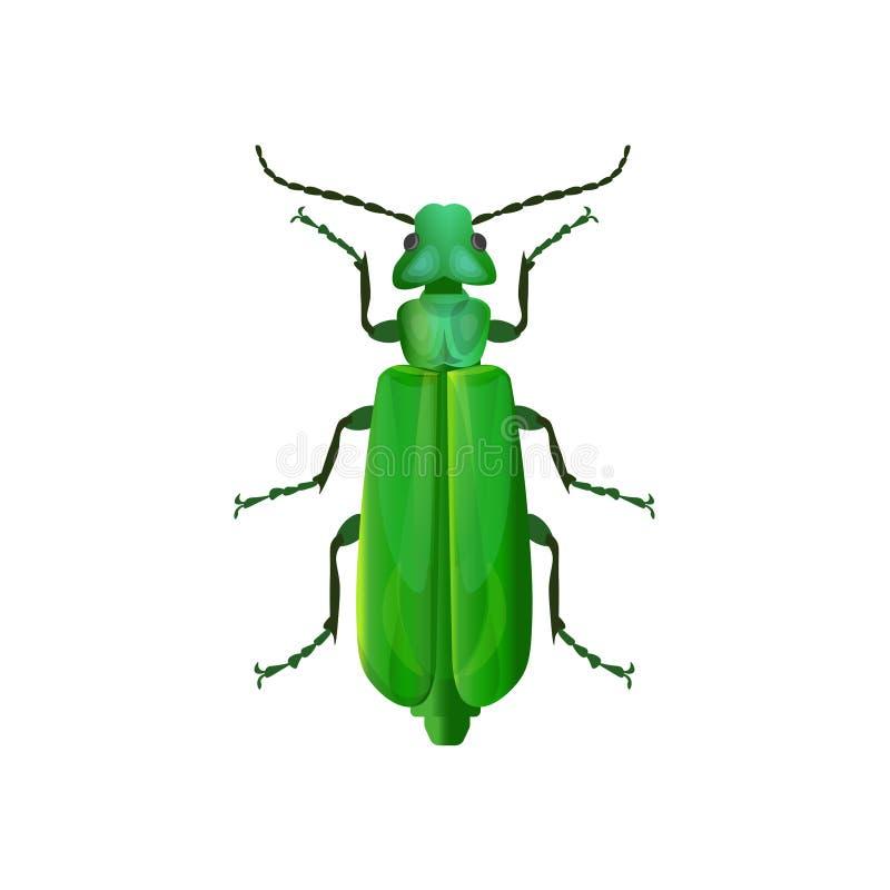 西班牙飞虫甲虫 皇族释放例证