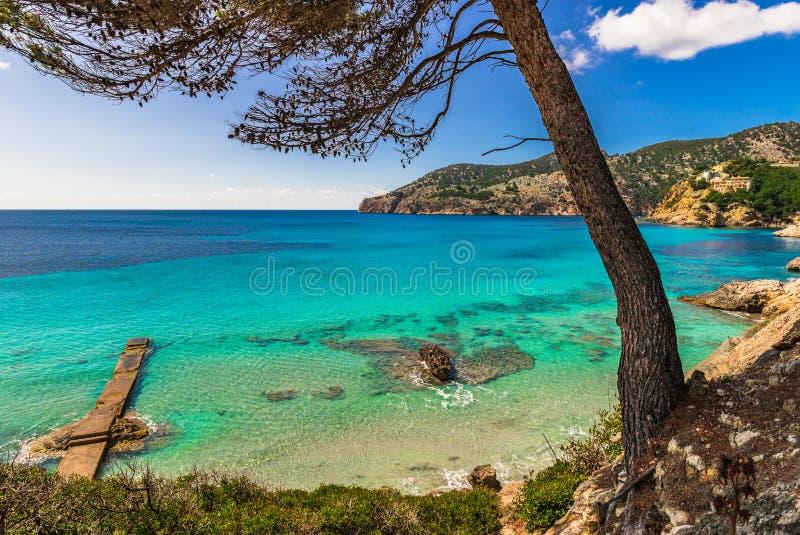 西班牙马略卡,在阵营de 3月的美好的海边风景 库存图片