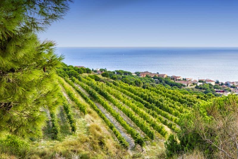西班牙:阿莱利亚酒区域的葡萄园在地中海附近的 库存照片
