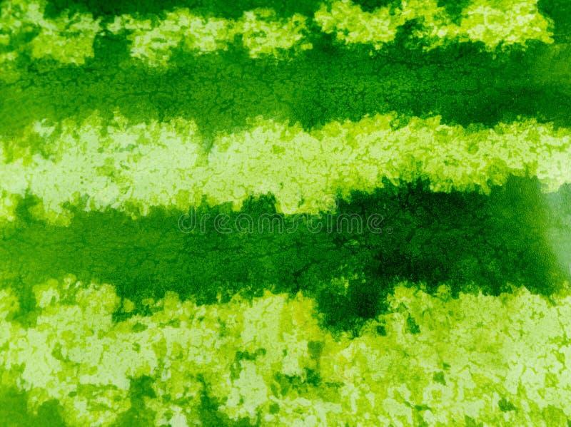 西瓜的绿色镶边纹理 库存照片
