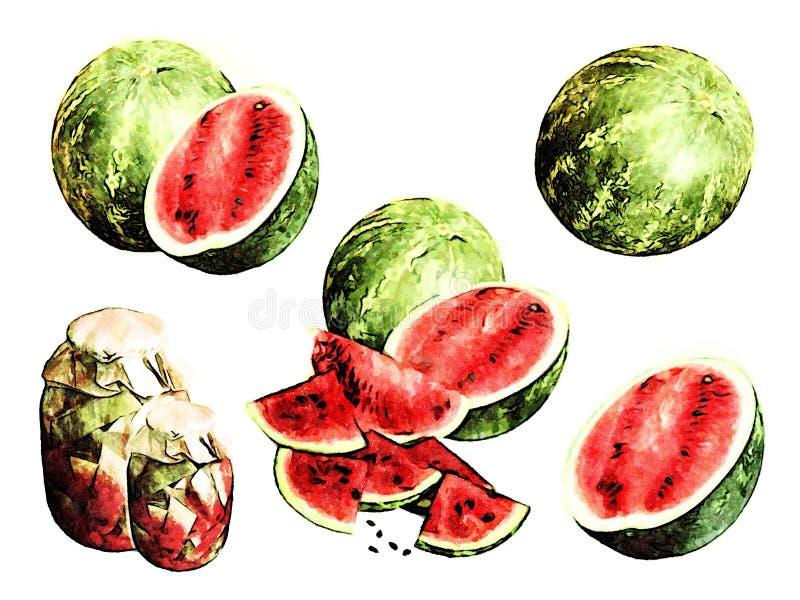 西瓜集合夏天食物植物的例证 皇族释放例证