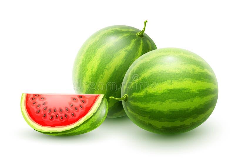 西瓜 整个新鲜的成熟甜果子 向量例证
