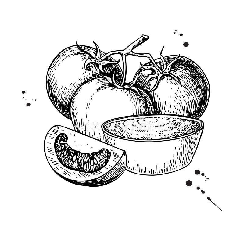 西红柿酱图画 传染媒介与碗ful的被隔绝的例证 向量例证