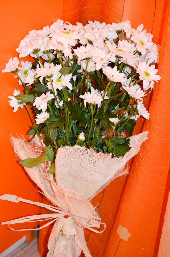 戴西花束在橙色背景开花 图库摄影