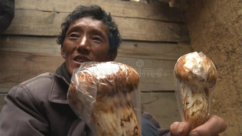 西藏人在Jidi村庄在matsutake生产区域的中心搜寻一销售的matsutake,坐在香格里拉的 免版税图库摄影