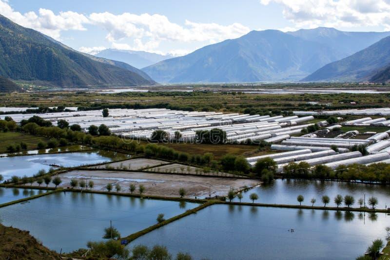 西藏高原的农田 免版税库存图片