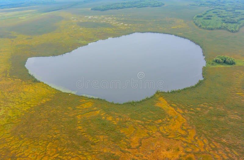 西西伯利亚的湖和沼泽 库存照片