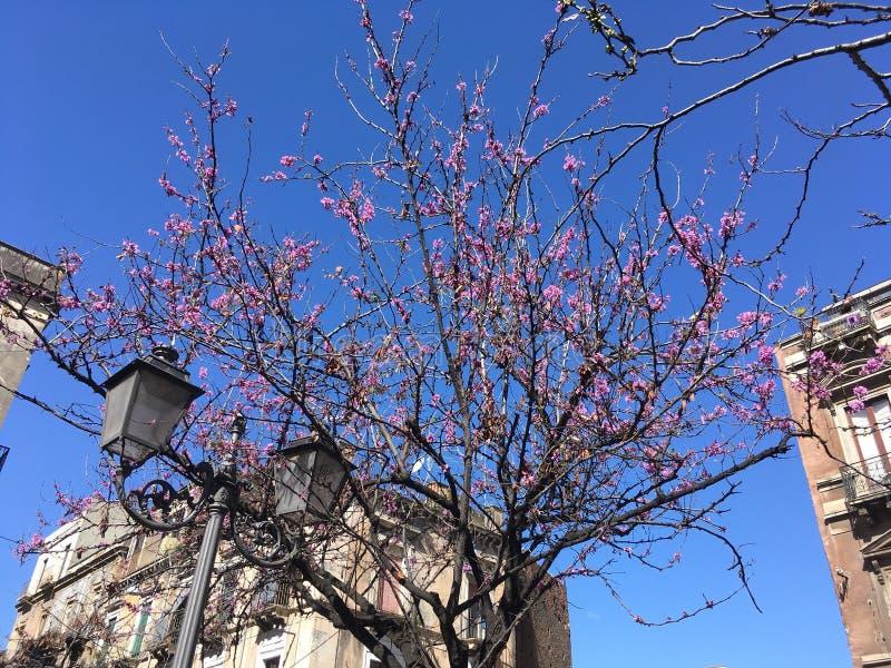 西西里人的春天 免版税库存图片