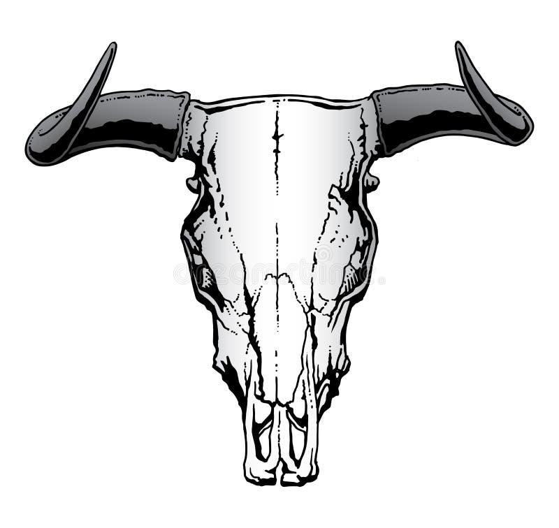 西部公牛或操舵头骨 皇族释放例证