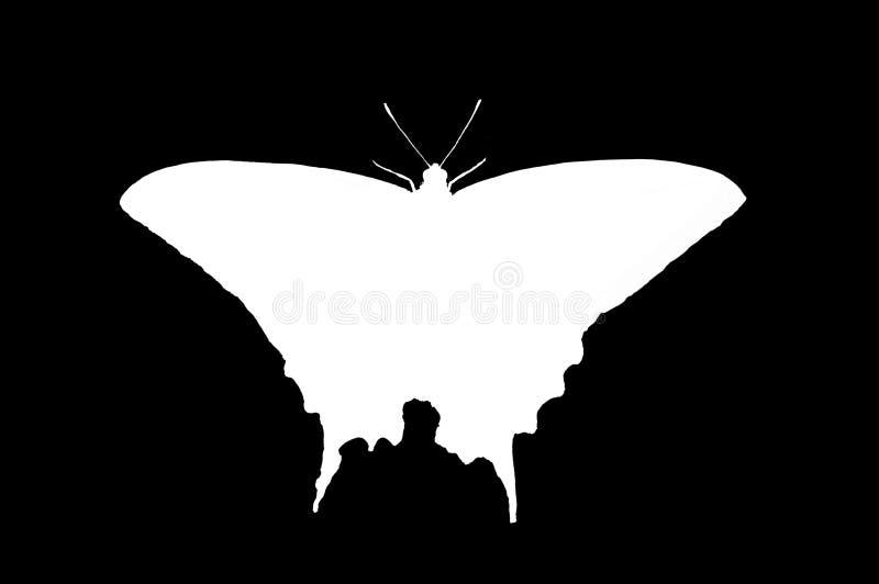 西部老虎Swallowtail剪影 免版税库存图片