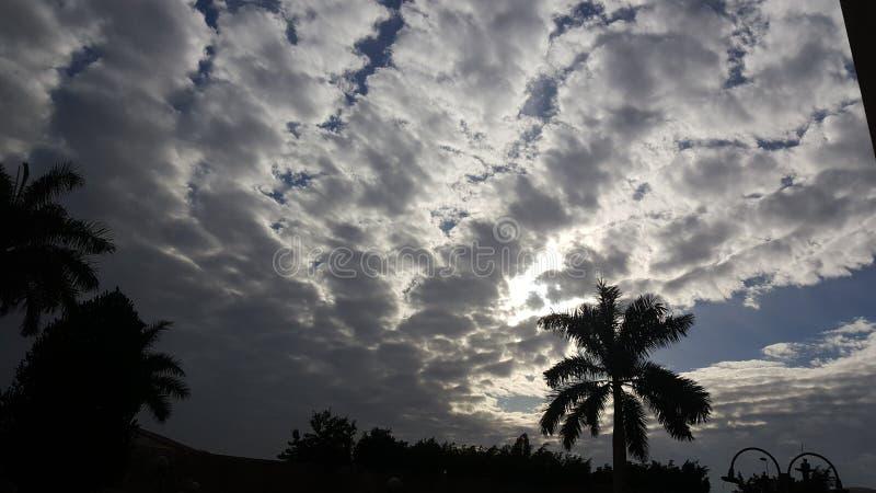 覆盖天天空早晨winteriscoming棕榈树的日落 库存图片