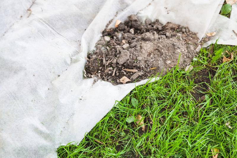 覆盖树根由非编织的织品的新的草坪 免版税图库摄影