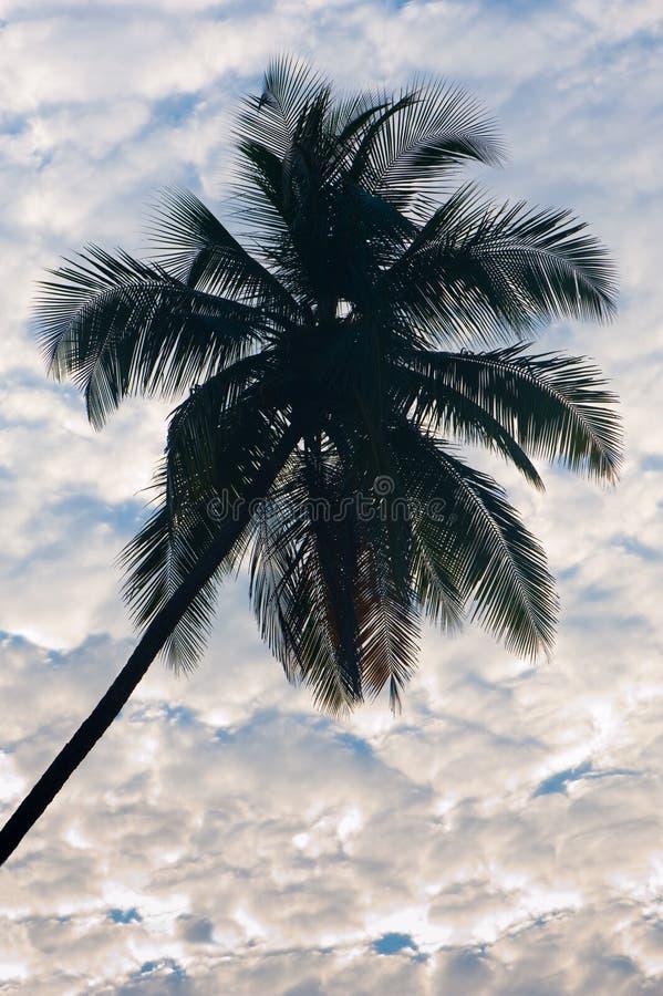 覆盖椰子 免版税图库摄影