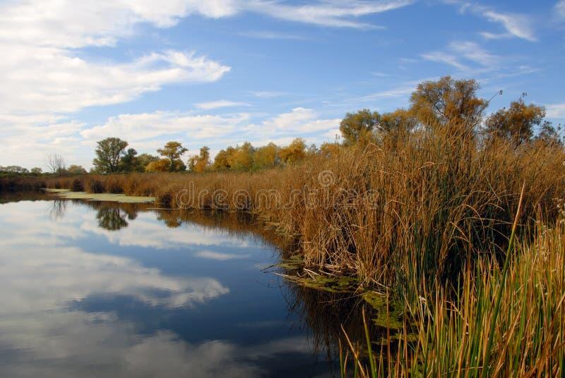 覆盖被反射的有花边的池塘 库存图片