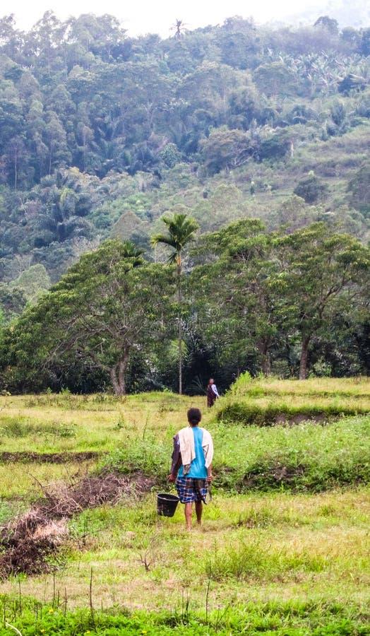 见面在领域的两名妇女在季风以后下雨弗洛勒斯,印度尼西亚 免版税图库摄影