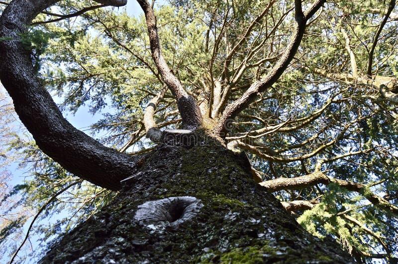 观察自然的丰满度从树的 库存照片