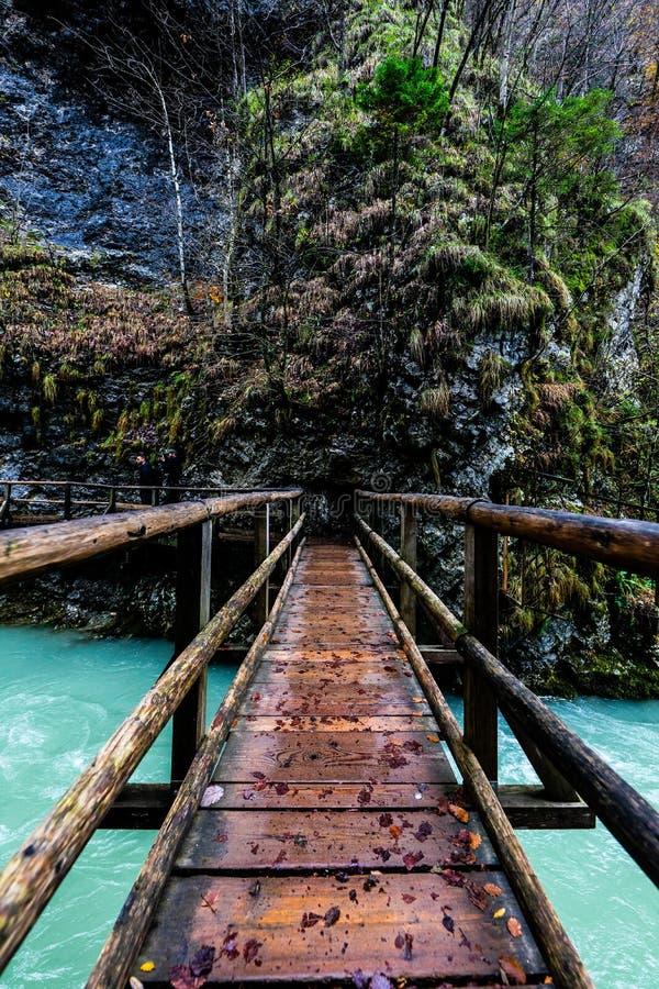 观点在一条河的一座吊桥射击了在森林里 免版税图库摄影
