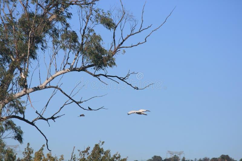 观点的在飞行中白色鸟 免版税库存图片
