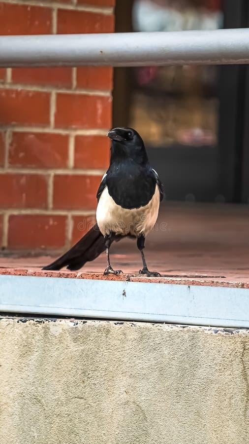 观点的垂直的关闭的在大厦的红砖墙壁的旁边一只小鸟 库存照片