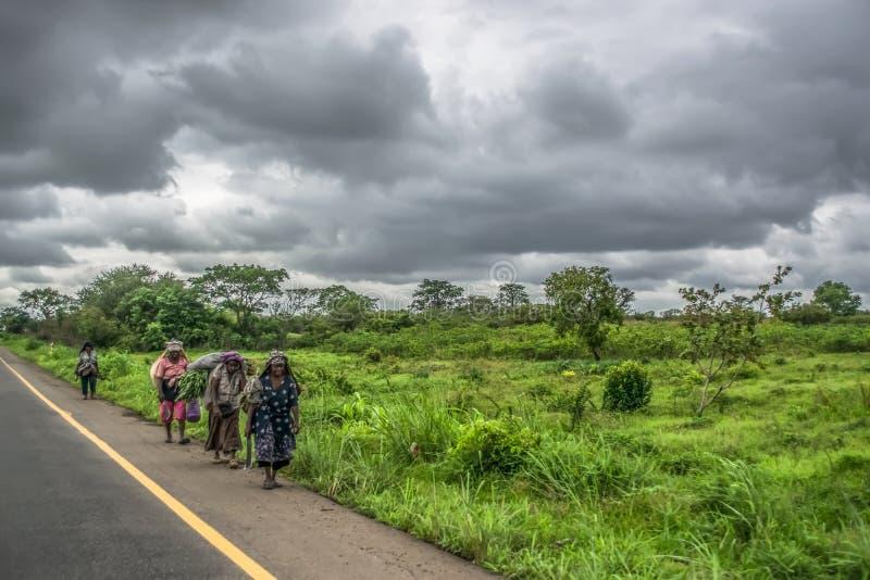 观点的年长妇女农夫,走在路一边,典型的热带风景作为背景 免版税库存图片