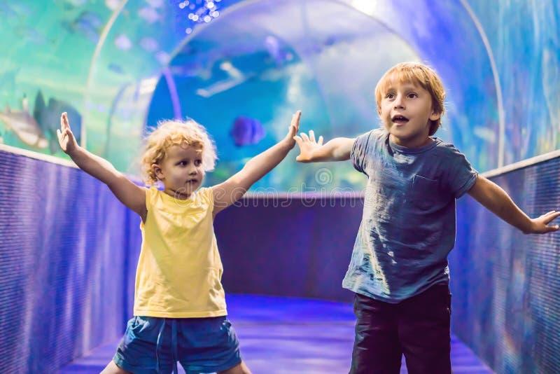 观看在大海洋生活坦克的小男孩和女孩热带珊瑚鱼 在动物园水族馆的孩子 免版税库存照片
