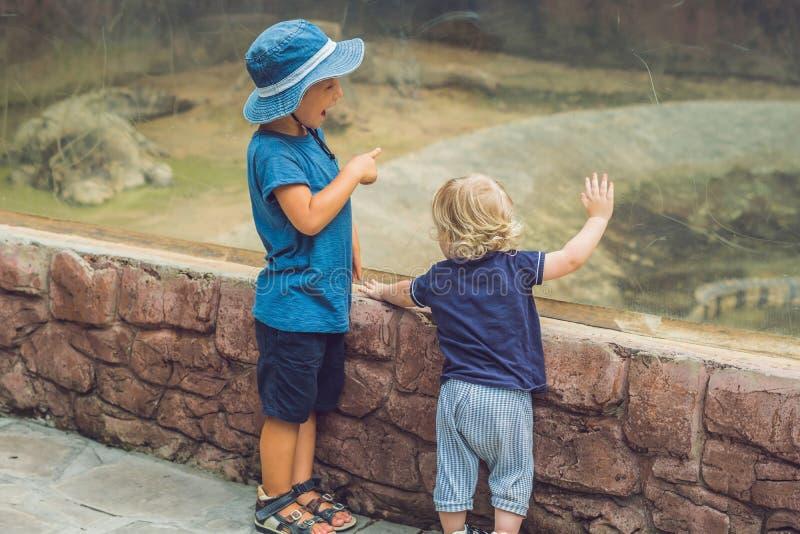 观看在玻璃容器的男孩爬行动物 免版税库存图片