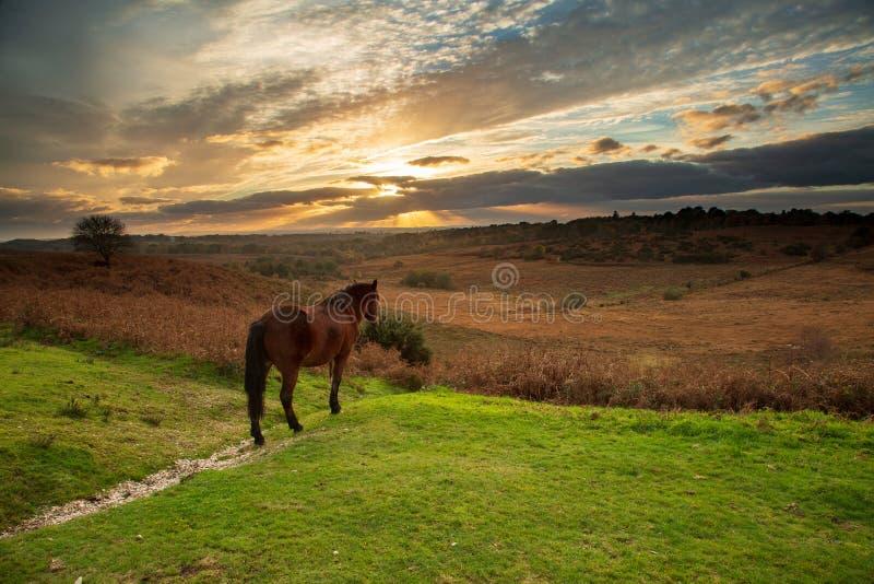 观看太阳落山的马 免版税库存照片
