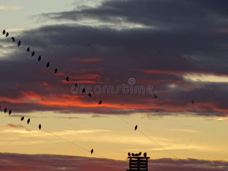 观看太阳集合的鸟 库存图片