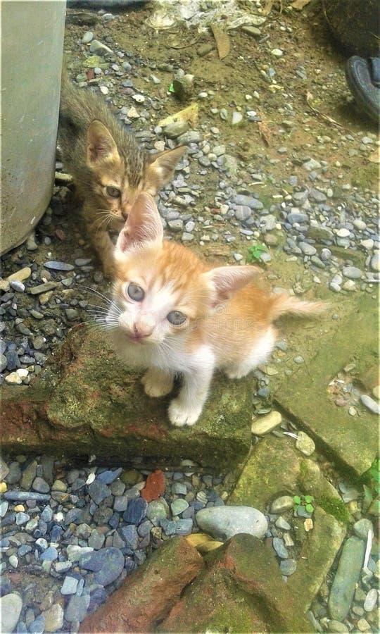 观看对您的一只美丽的无辜的猫 免版税库存图片