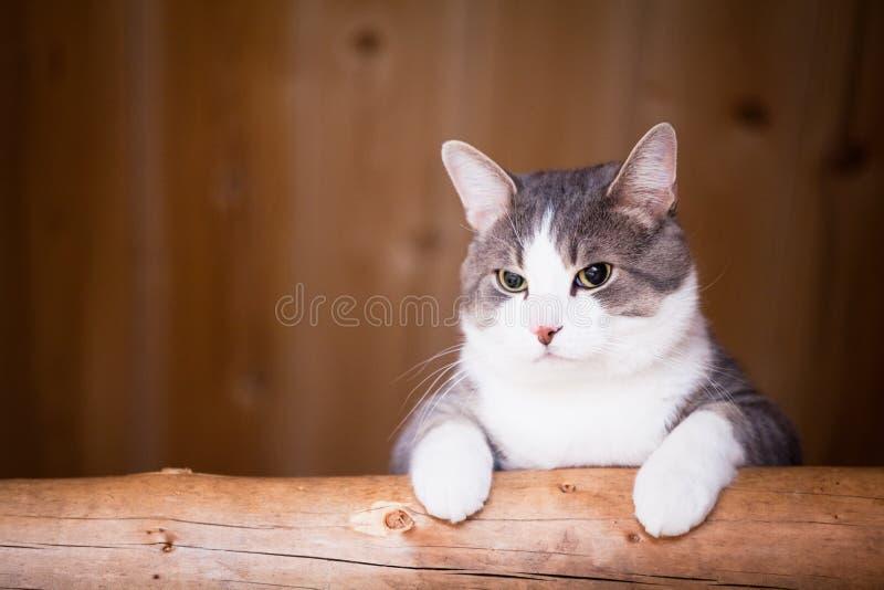 猫观看 库存图片