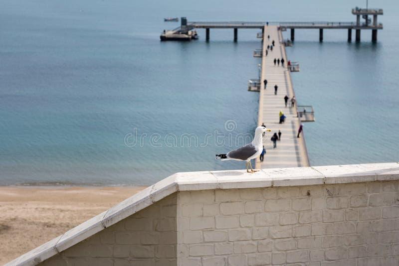 观看桥梁的海鸥 库存照片