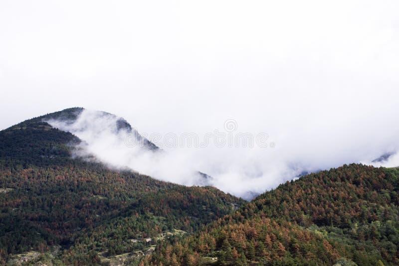 观看森林和山风景,当树叶子秋季时 免版税库存图片