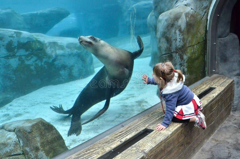 观看海狮的女孩 免版税库存照片