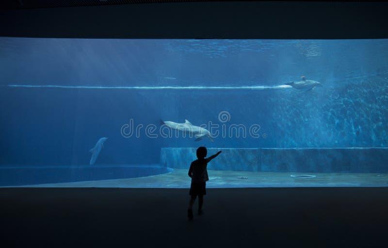 观看海豚的孩子的照片 库存图片