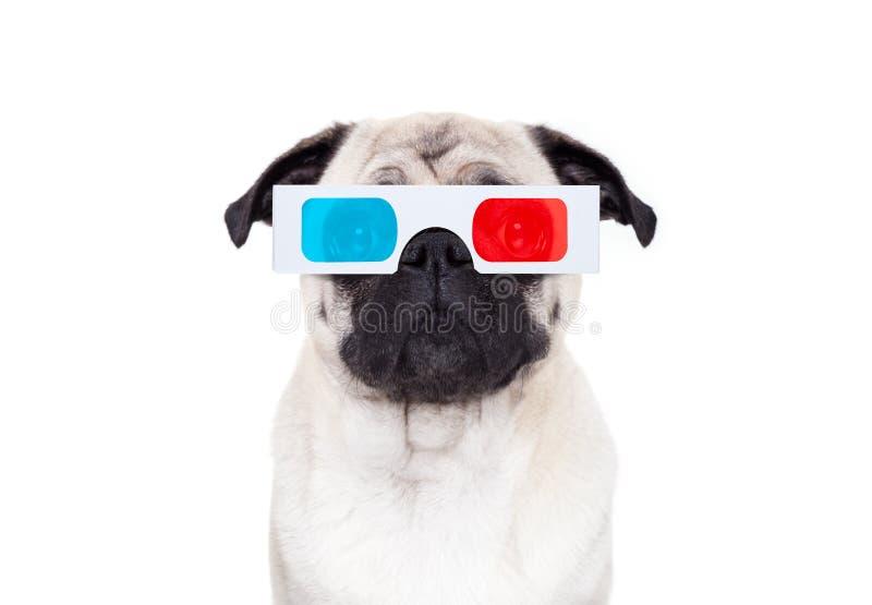 观看电影的狗 免版税库存图片