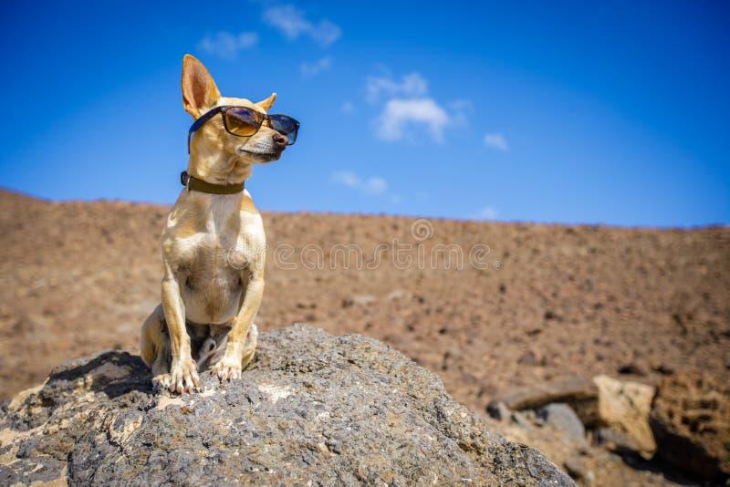 观看的狗户外 免版税库存照片