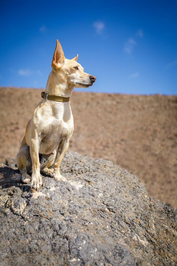 观看的狗户外 免版税图库摄影