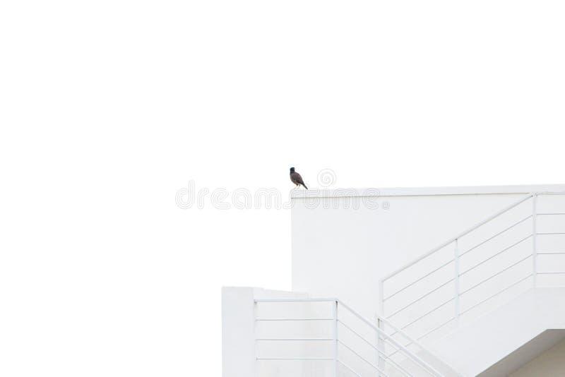 观鸟从高楼 库存照片