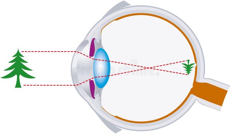 视觉,眼珠,光学,组合透镜 皇族释放例证