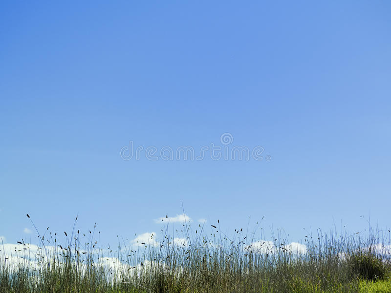 角度蓝色草长的低天空视图 免版税库存图片
