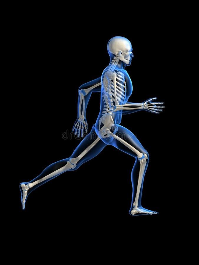 解剖学人运行中 库存例证