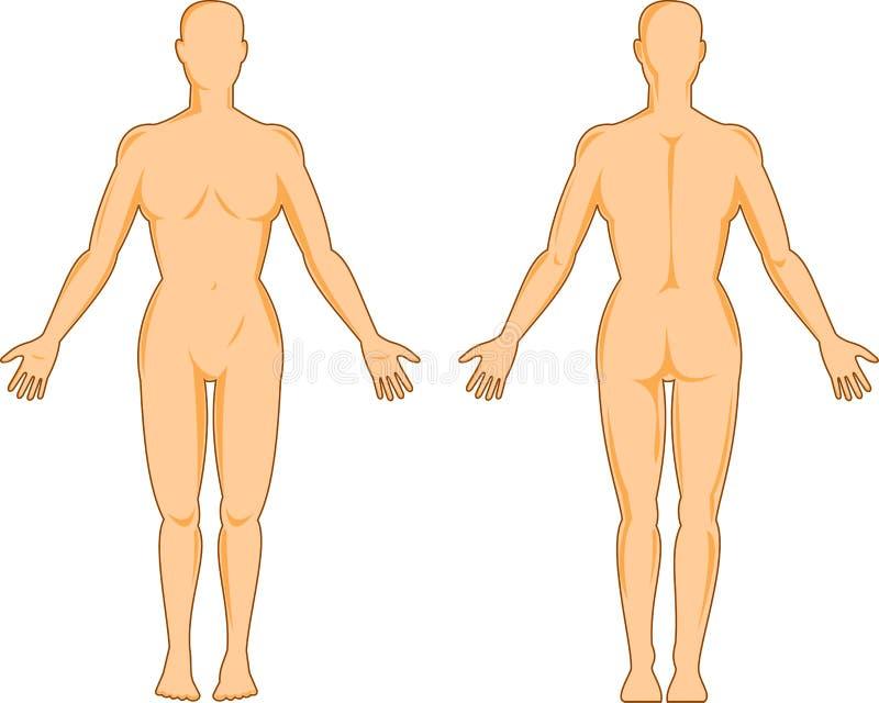 解剖学女性人 皇族释放例证
