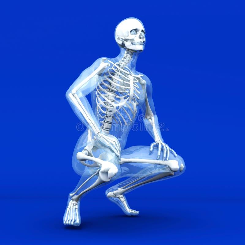 解剖学形象化 库存例证