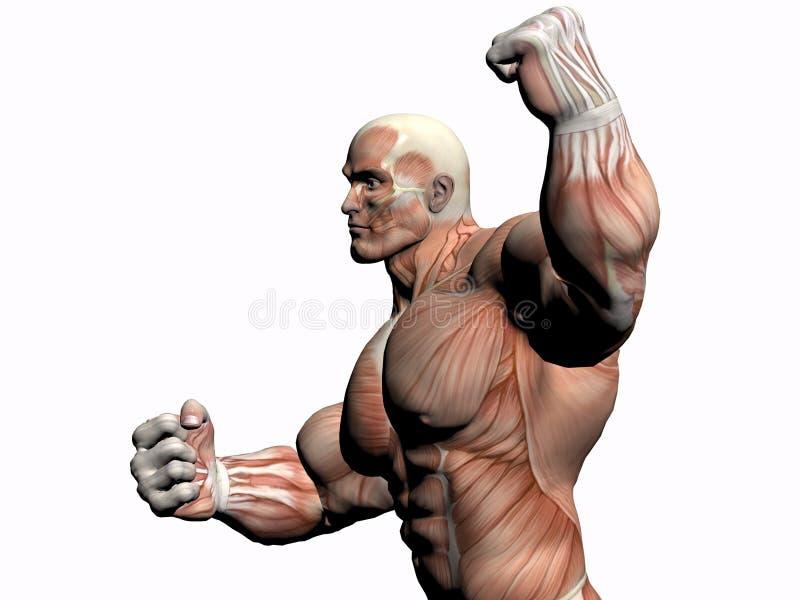 Download 解剖学车身制造厂人 库存例证. 插画 包括有 正横, 赤裸, 带状闪长岩, 实际, 人力, 教育, 行程, 健身 - 193151