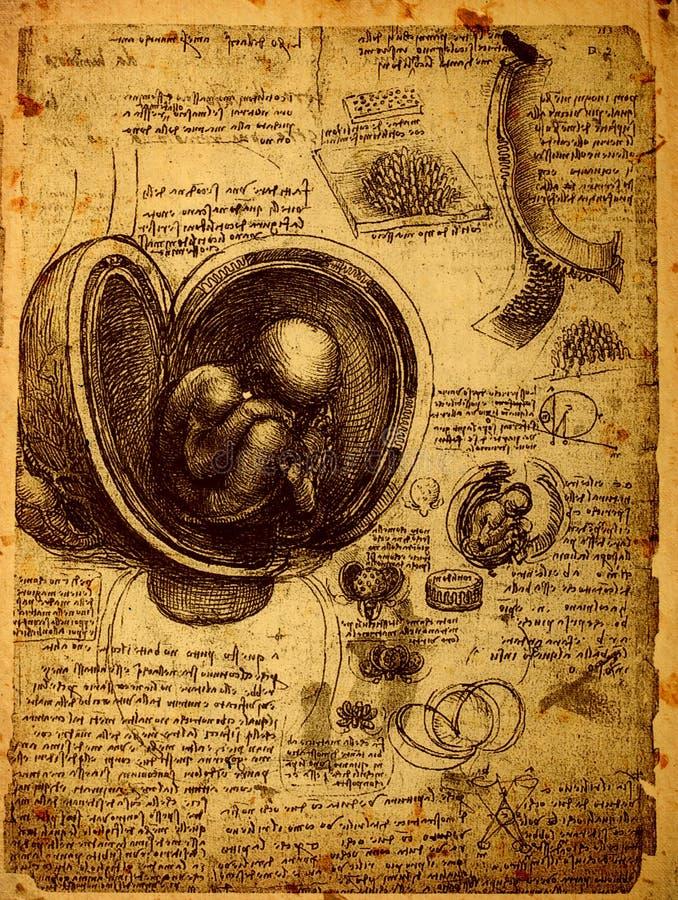 解剖学 皇族释放例证
