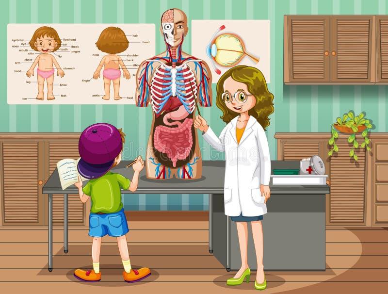 解释关于人的解剖学的医生 向量例证