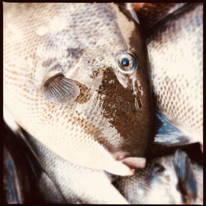 触发器鱼 库存图片