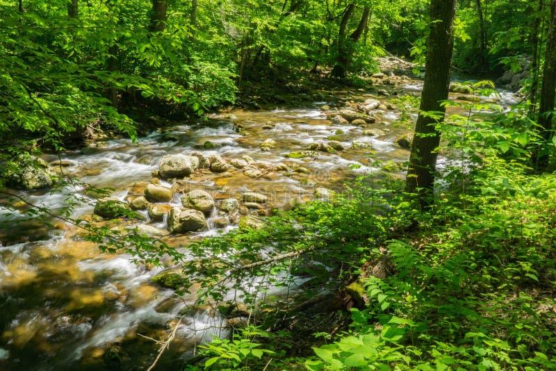 詹宁斯小河一条普遍的鳟鱼小河- 2 库存图片