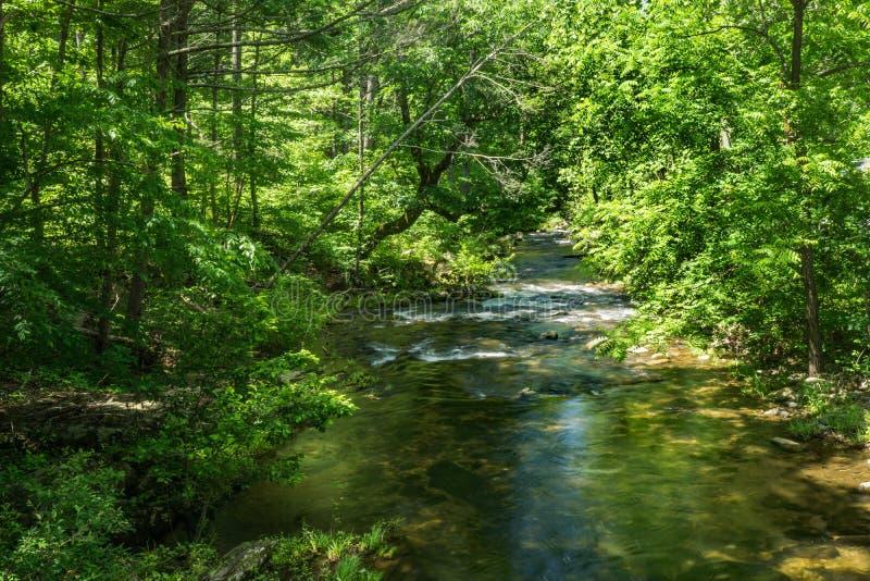 詹宁斯小河一条普遍的鳟鱼小河- 4 库存照片