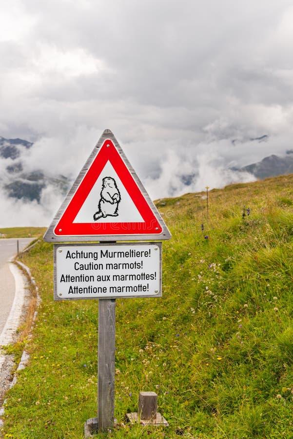 警告土拨鼠在一条高山路的交通标志 库存照片